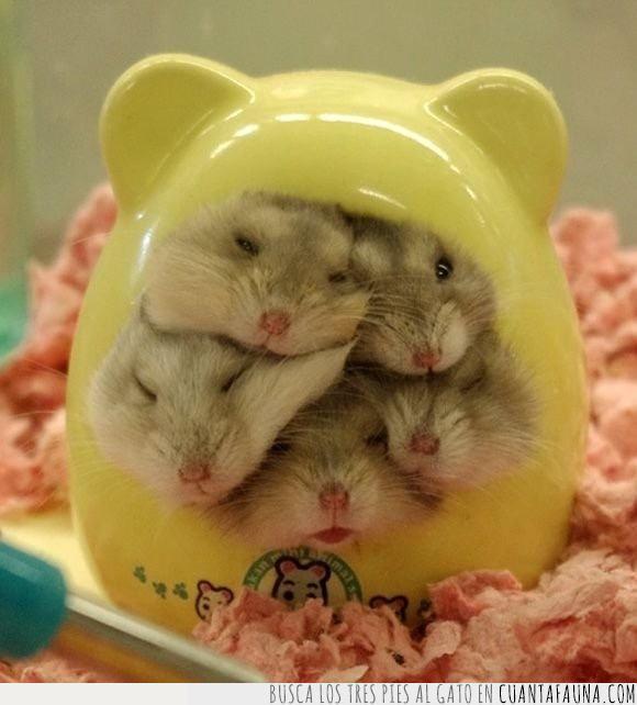 apretados,apretujar,caja,crías,grises,hamsters,huevo,jaula,juguete,pequeño,piso