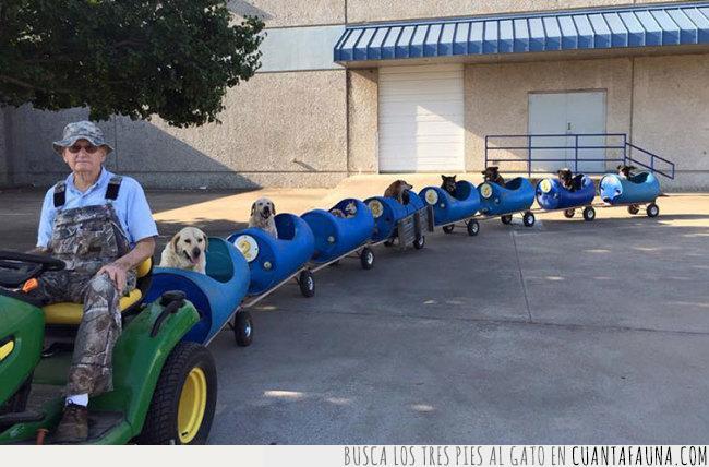 adoptar,azul,bidones,hombre,paseo,perros,refugio,tractor,tren,trenecito,verde,vuelta