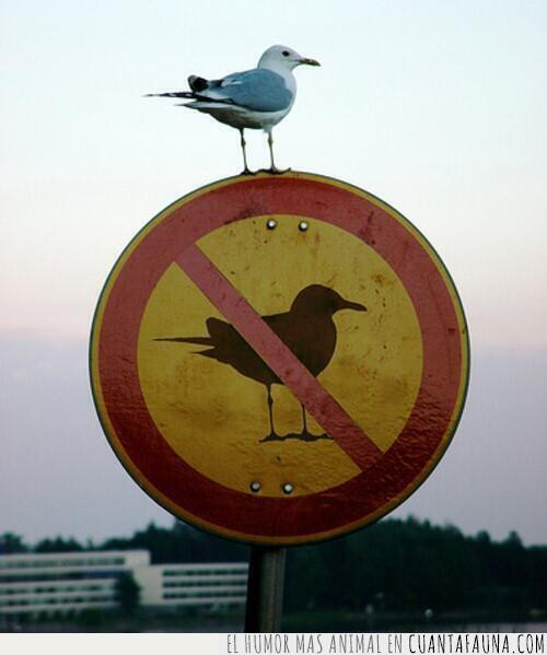 ave,estar,gaviota,normas,prohibir,rebelde,romper,señal
