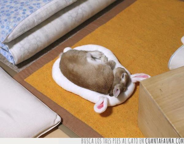 cama,cojín,conejo,cuadrado,dormir,elevar,manta,matemáticas,orejas,peluche