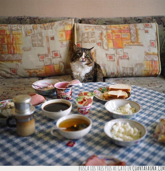 alimentos,almorzar,arroz,comida,desayuno,día,importante,mesa,serio,tomar,tostadas,yogur