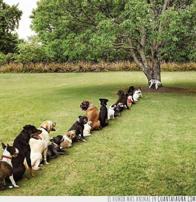 árbol,césped,cola,deforestación,jardín,lavabo,mear,parque,perros,pipi,público
