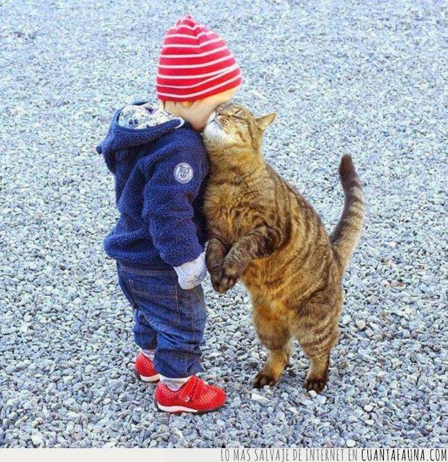 amistad,amor,bebé,demostración,demostrar,forma,gato,mejilla,niño,tipo