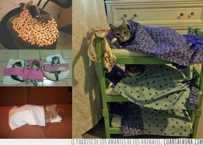 cama,cubrir,cuidar,dueño,gatos,mantas,tapar