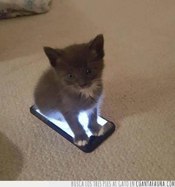 bloqueo,gato,móvil,pantalla,patrón,seguridad,seguro,sistema