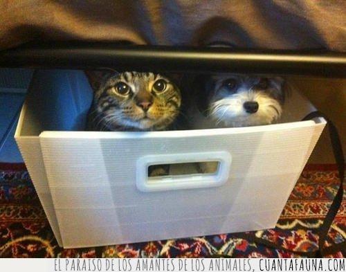 acecho,búnker,caja,cama,gato,observar,perro,tranquilo