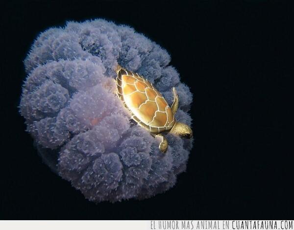 luz,mar,marino,medusa,nadar,navegar,pilotar,submarino,surfear,tortuga
