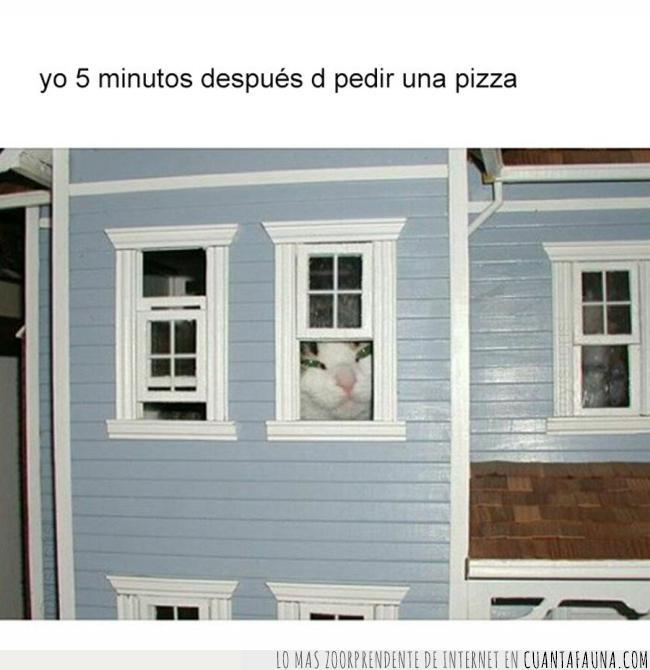 casa,esperar,hambre,juguete,muñecas,pedir,pizza,ventana