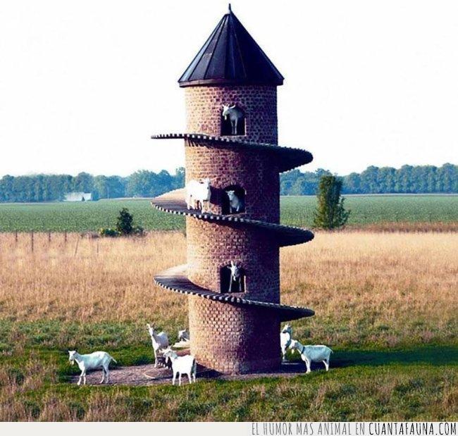 arriba,cabras,castillo,construcción,escaleras,reino,subir,torre