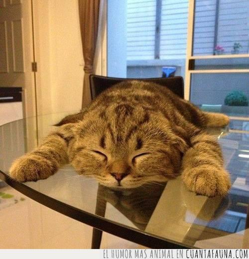 aplastado,cara,cerrados,cristal,dormir,gato,gravedad,mesa,ojos