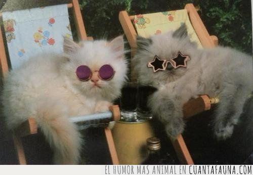 discoteca,fiesta,gafas,gatos,molar,noche,party hard,rebentar,viernes