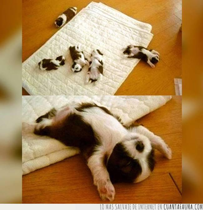 abandonar,barriga,cachorro,cama,crías,dormir,manta,pequeños,perros,siesta