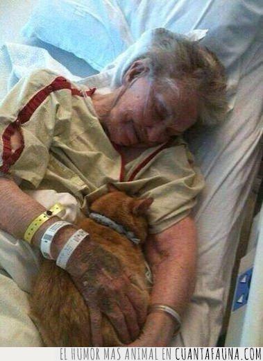 abuela,anciana,día,gato,hospital,mayor,mujer,permitir,planeta,último,vida,visita