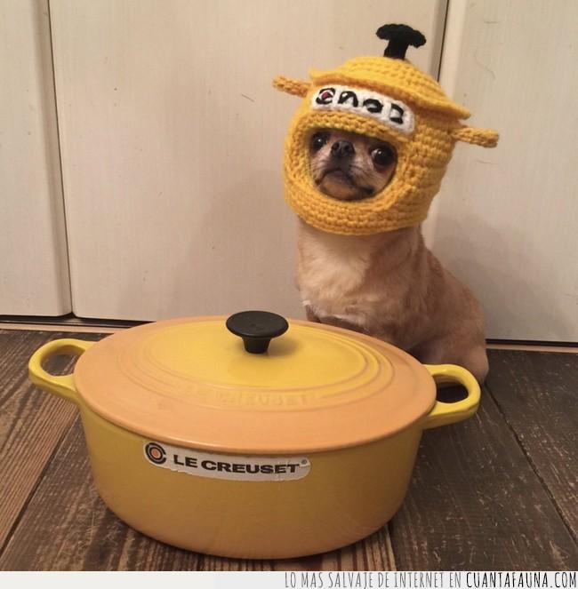 amarillo,cocina,gorro,le creuset,llegar,olla,punto,ser,tejido,utensilio