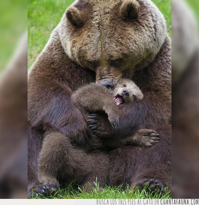 abrazo,amor,cachorro,cría,mama,maternidad,mejor,oso