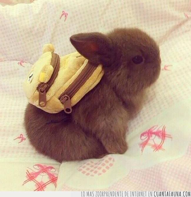 colegio,conejo,escuela,estudiar,ir,listo,mochila,preparado