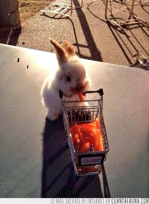 caja,carrito,coger,comer,comprar,conejo,esperar,pagar,resistir,super,zanahorias