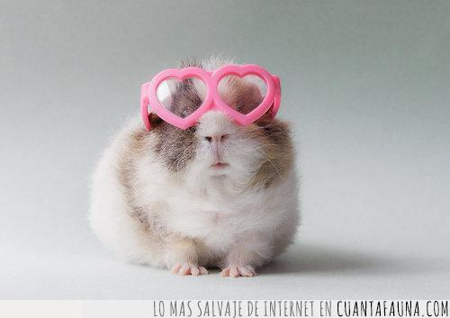 autoafirmar,corazones,enemigos,gafas,gonna,hate,haters,rosas