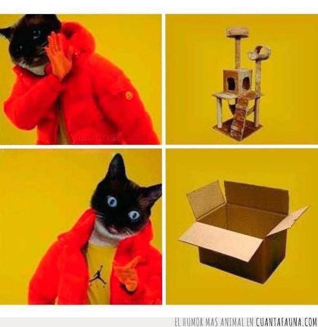 caja,drake,elección,entender,gato,gustar,juguete,meme,parque,preferir,rascador,videoclip