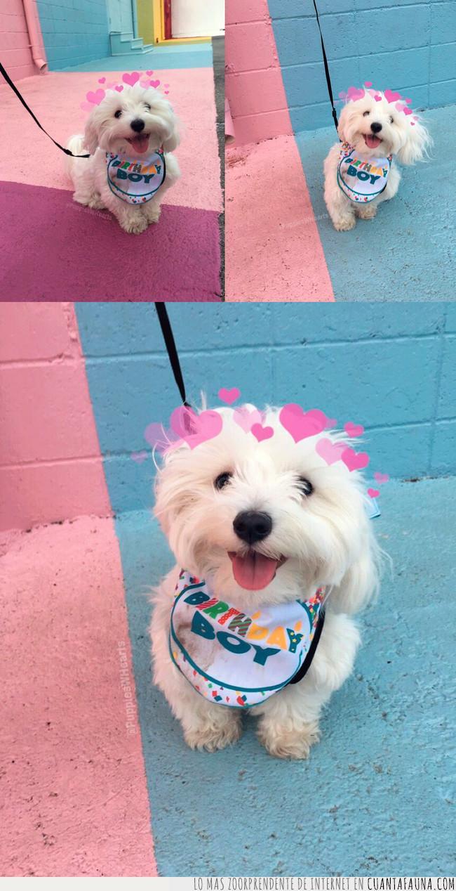 aniversario,canción,celebrar,corazones,cumpleaños,filtro,perro,snapchat