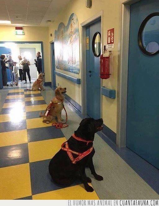 hospital,ilusión,impaciencia,niños,perros,terapia