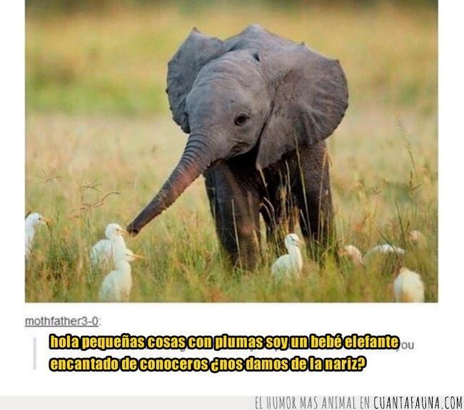 aves,bebé,campo,conocer,cría,elefante,encantado,manos,nariz,pájaros,pico,plumas,saludar,trompa