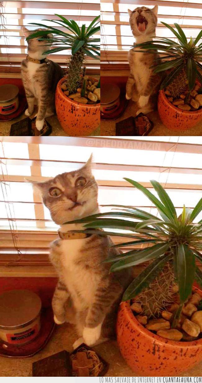 cactus,caras,consecuencias,gato,hacer,morder,repetir,volver