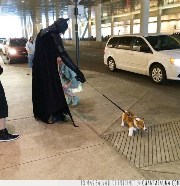 batman,calle,correa,disfraz,pasear,perro,responsabilidad,sacar,salvar