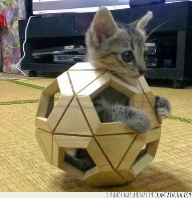 abrir,estructura,figura,gato,geométrica,madera,pieza,puzzle,relación,socializar,volumen