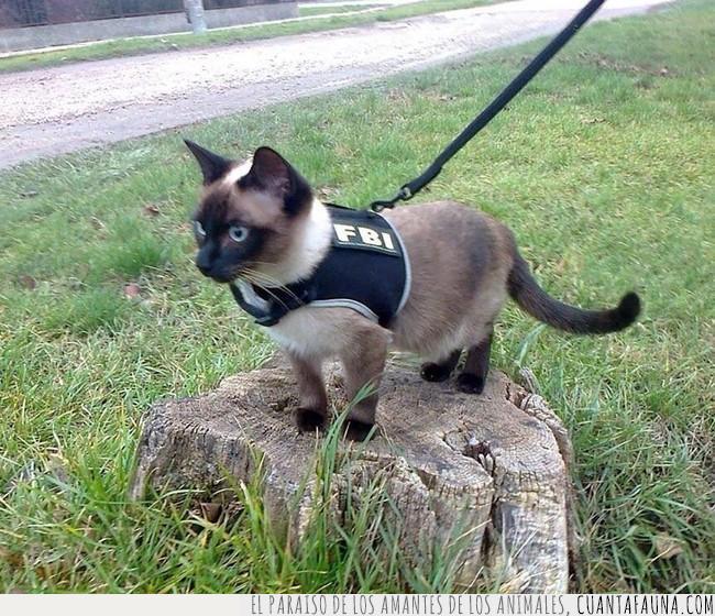 brazo,cesped,chaleco,fbi,gato,ley,pasear,peludo,persa,policia,tronco
