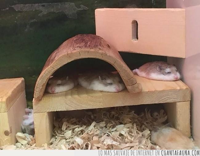 adorables,bonitos,chafados,dormidos,dormir,hámster,jaula,madera,pequeños,rechonchos,tres