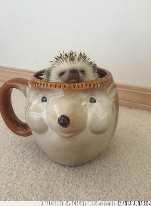 café,cara,cerámica,erizo,esconder,taza,tomar