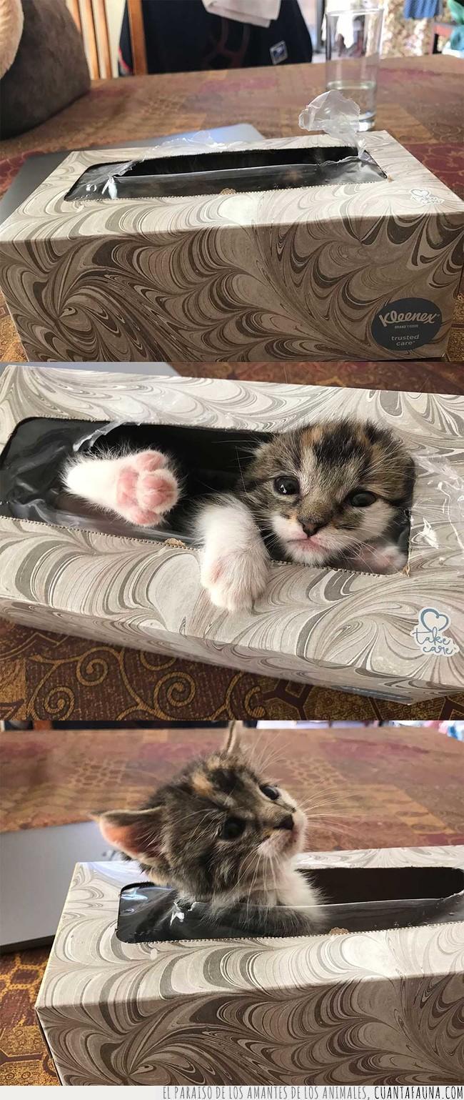 buscar,caja,encontrar,esconder,gato,hora,kleenex,pañuelos,papel,starter pack