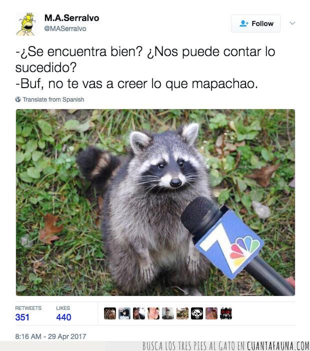 animales,entrevistas,juego palabras,mapachao,mapache,twitter