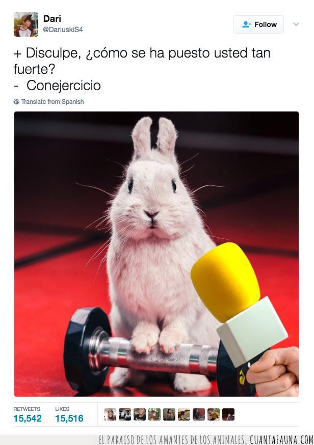chiste,conejercicio,conejo,entrevista,juego,meme,palabras,pesas,twitter