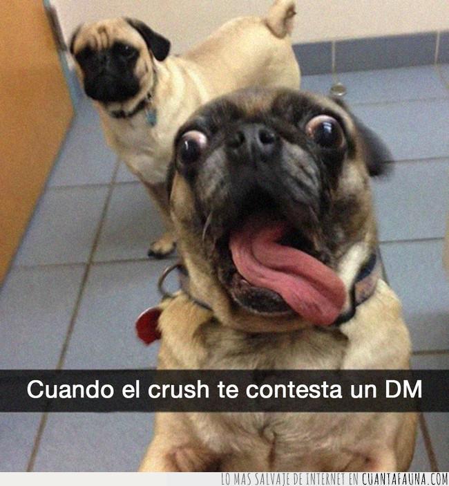 amor,contestar,crush,dm,emocionar,flipar,lengua,ligue,loco,mensaje,perro,privado,pug
