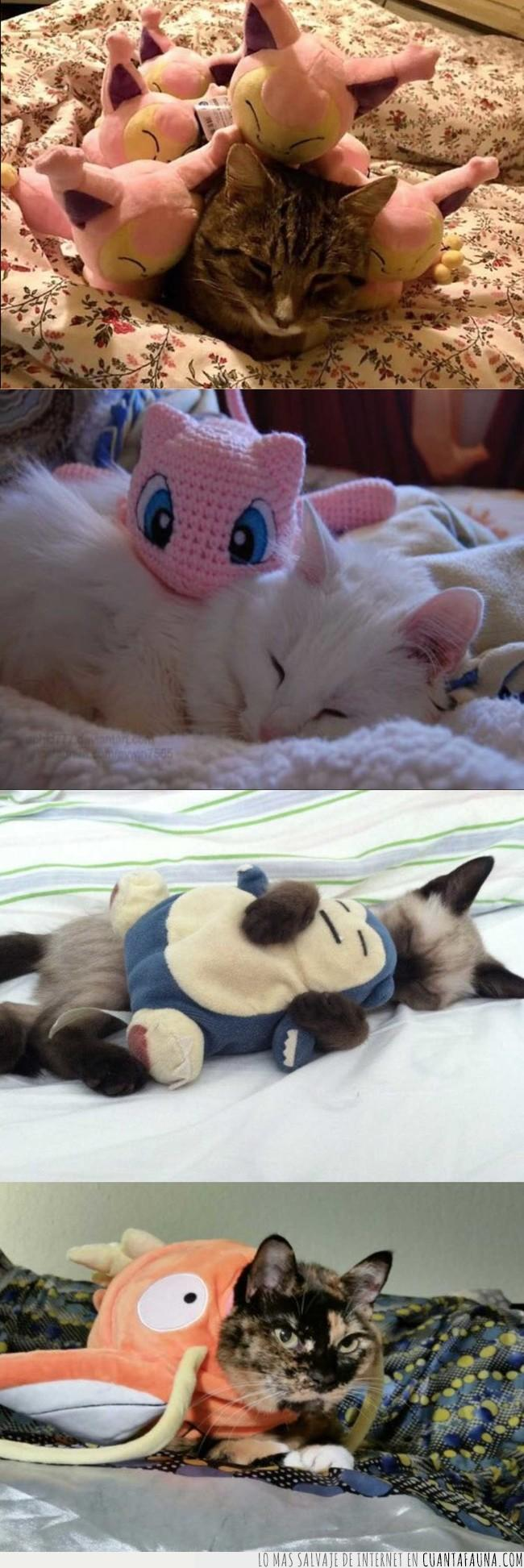 cama,dormir,gatos,necesitar,paz,peluches,pokémon