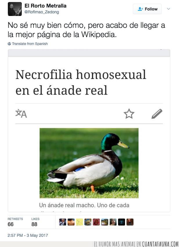 ánade,conocimiento,curiosidad,homo,mejor,página,pato,saber,wikipedia