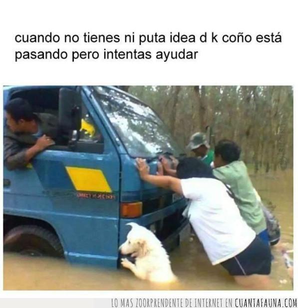 ayuda,camión,empujar,hacer,idea,inundación,lluvia,perro,río,saber,vehículo