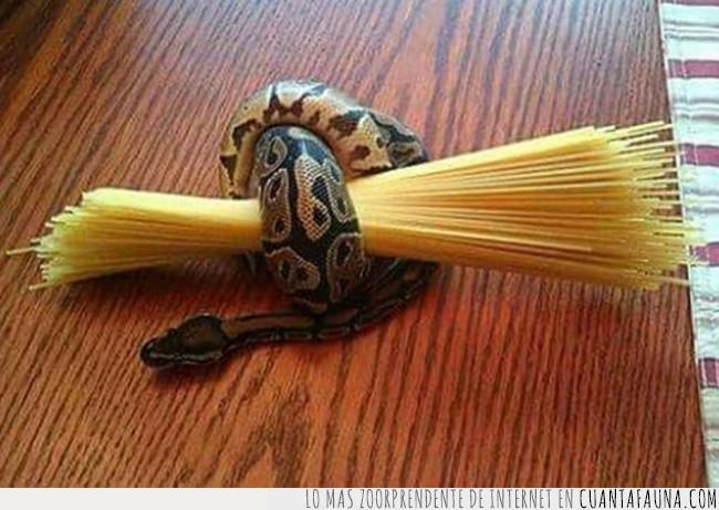 cantidad,cocinar,comer,medida,pasta,ración,serpiente