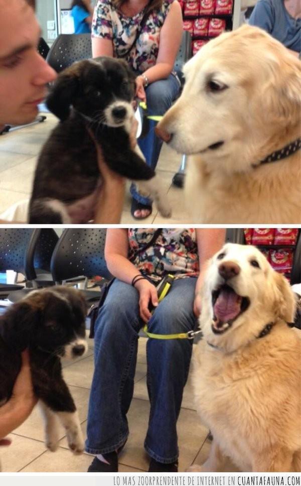 bien,cara,felicidad,hermana,llevar,perro,presentación
