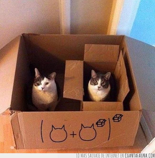 caja,ecuación,gato,matemáticas,resolver