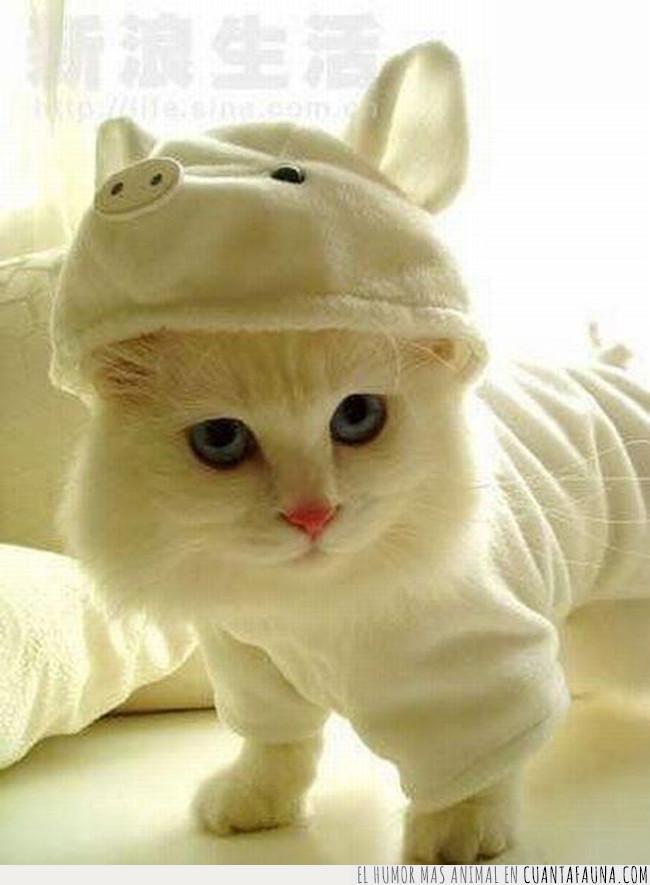 blanco,capucha,cerdo,creer,disfraz,gato,pijama,ser