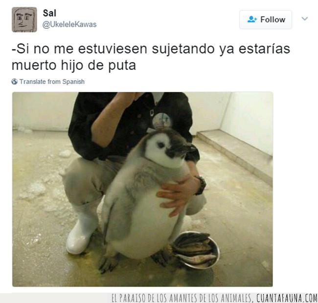 adorable,amenaza,atacar,enfadado,muerto,pingüino,sujetar