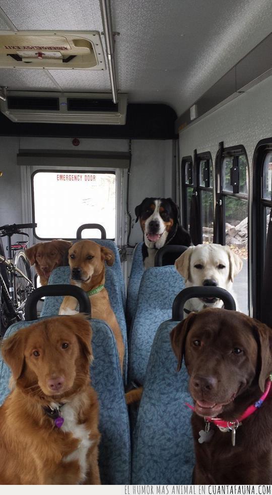 asientos,autocar,bus,coger,conducir,ir,línea,lugar,mejor,perros,público,ruta,transporte,trayecto