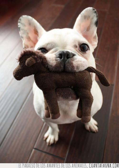 boca,juguete,morder,peluche,perro,traer