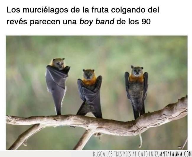 back street boys,banda,bat street boys,boy band,cantantes,chicos,colgar,murciélagos,rama