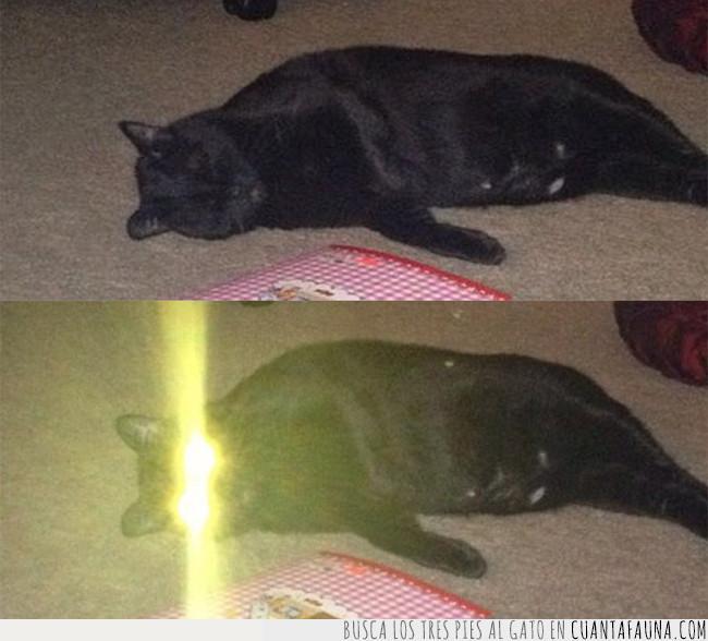 favor,flash,fregar,gato,iluminar,lavar,luz,madre,ojos,pedir,platos