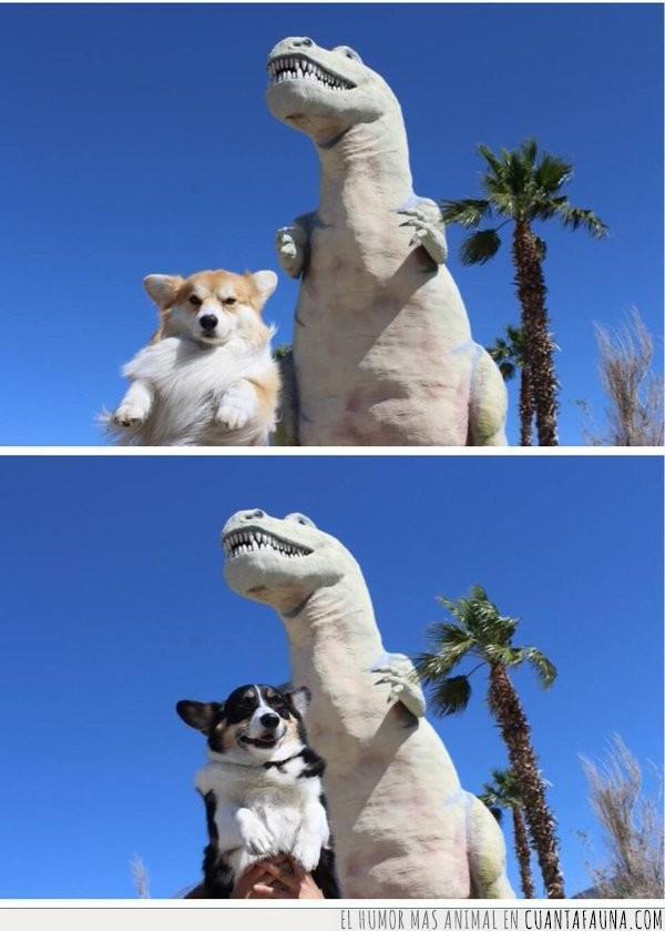 amigo,amigos,brazo,corgi,corto,dinosaurio,foto,pandilla,perro