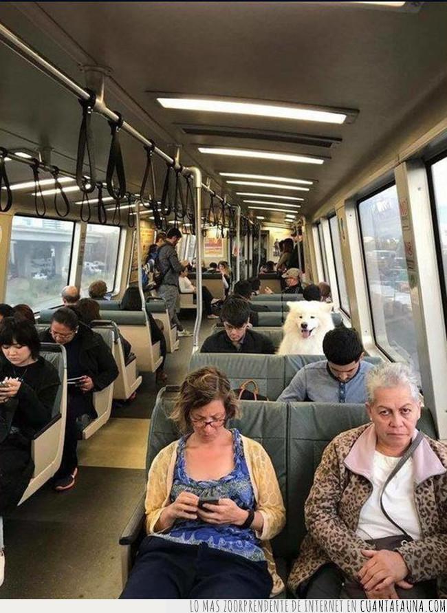 asiento,autobús,bus,buscar,juego,lejos,pelota,perro,recoger,sentar,traer,transporte,viajar
